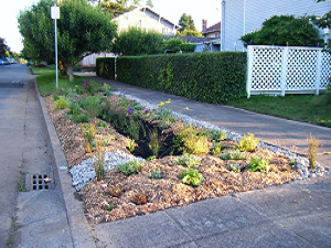 Photo of a bioretention type